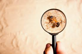 What is an Annual Pest Inspection- know its benefits